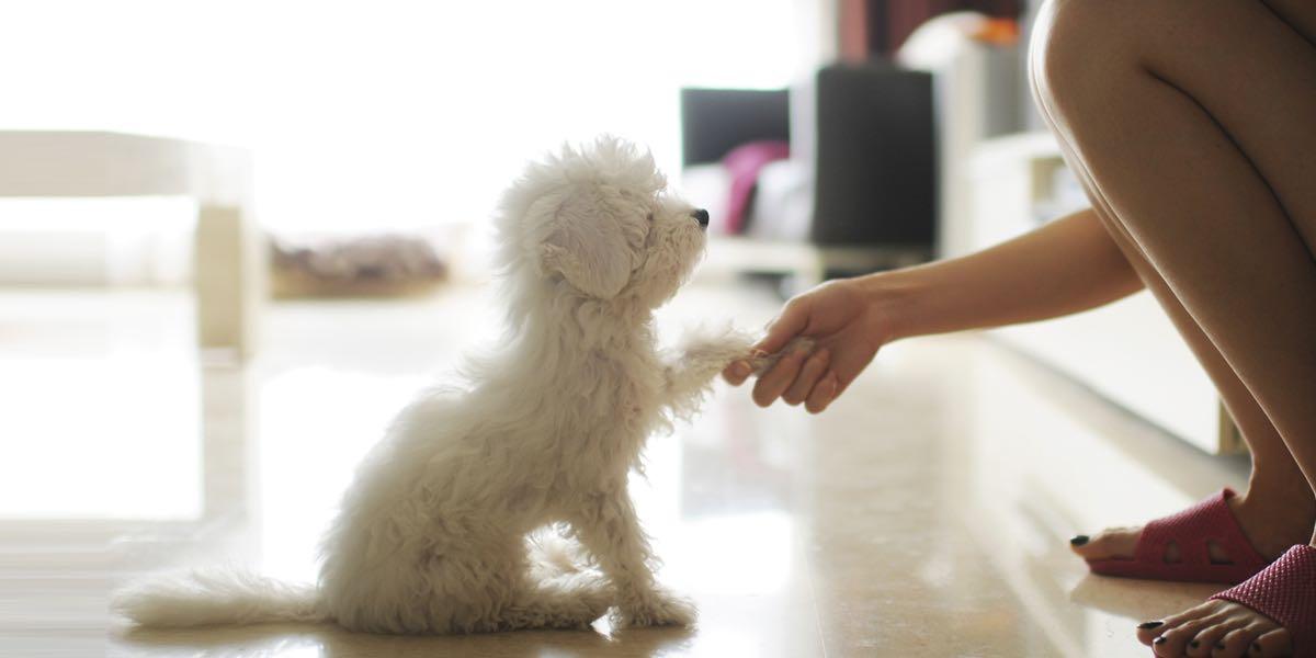 寵物訓練的專業服務